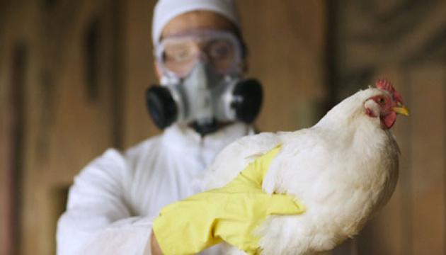 В России выявили первый в мире случай инфицирования человека птичьим гриппом H5N8