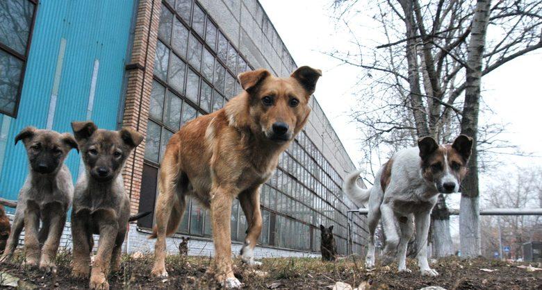 В России готовят законопроект о введении учета домашних и бездомных животных