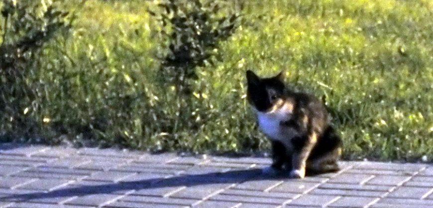 Кошки нашего Котобурга
