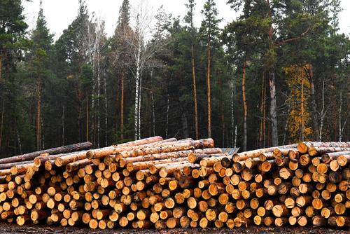 Минприроды и Рослесхоз категорически отвергли идею приватизации лесов