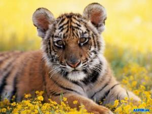 1241254247_animals.alfor.ru.070