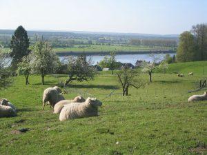 Фийон призвал снять антироссийские санкции, «истощающие сельское хозяйство Франции»
