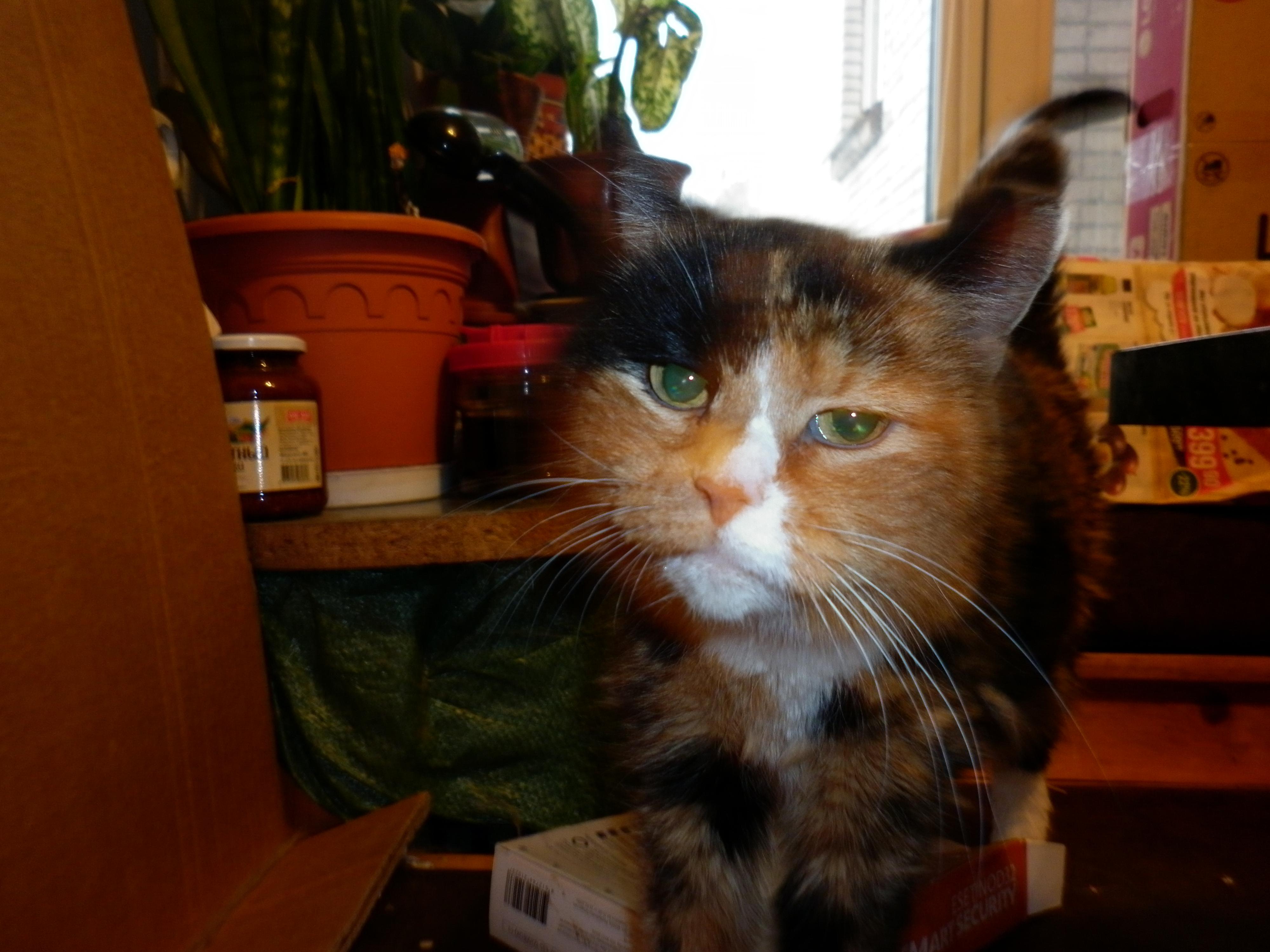кошка дома регистрацию домашних животных