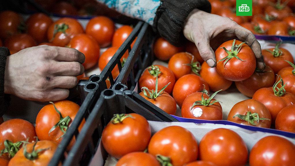 тоннами турецких томатов