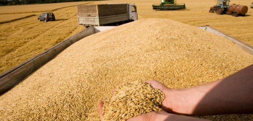 Цена на российскую пшеницу выросла, спрос снизился