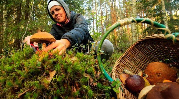 Минсельхоз не планирует регулировать сбор ягод и грибов гражданами