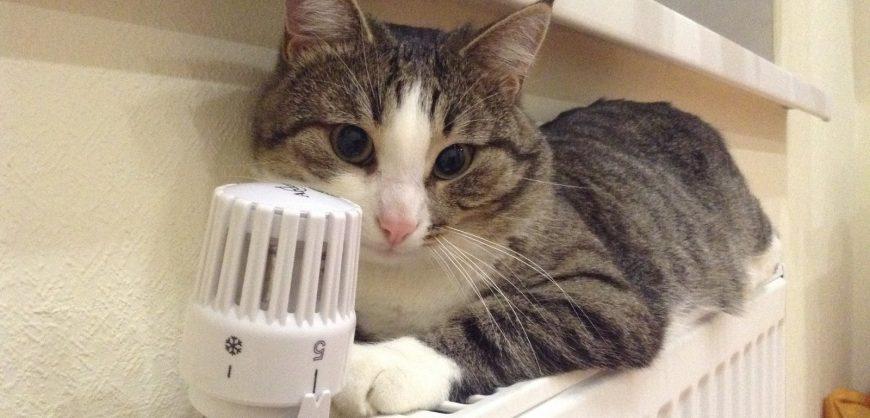ФАС выступила против обязательной установки счетчиков тепла