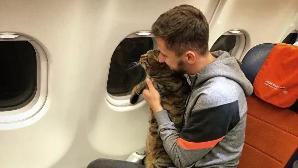 Я, ты, он, она ― вместе встанем за кота!