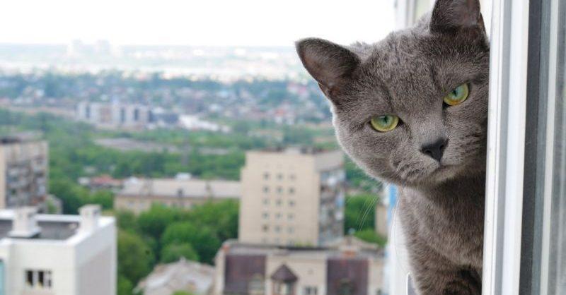 В Петербурге ввели режим полной самоизоляции
