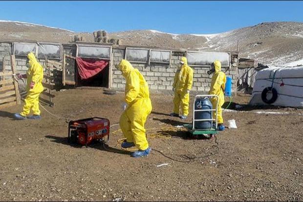 В граничащей с Россией провинции Монголии введён карантин из-за вспышки чумы
