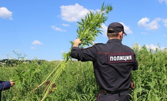 В Псковской области полицейские выращивали коноплю для подброса подозреваемым