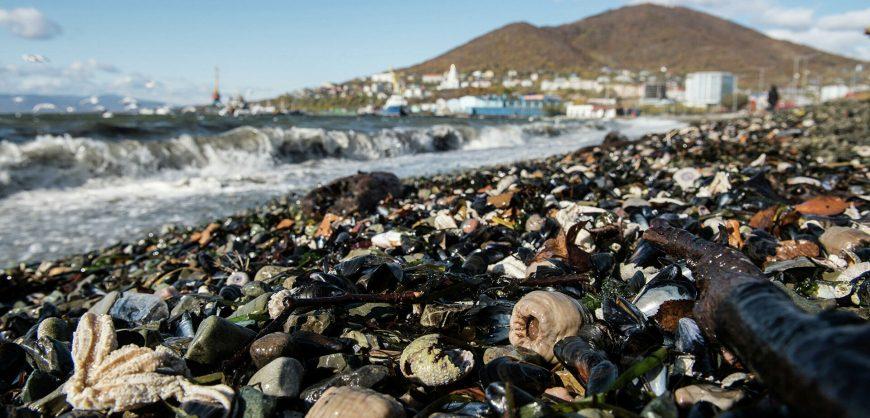 Следственный комитет назвал природное загрязнение причиной экологической катастрофы на Камчатке
